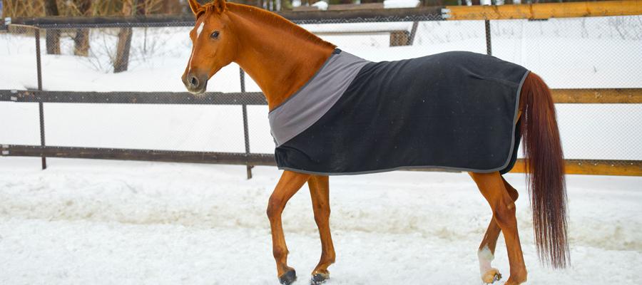 La couverture de cheval